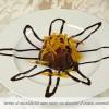 58-hotel-il-castello-frutta-dessert